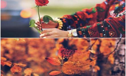 وردة الرّبى
